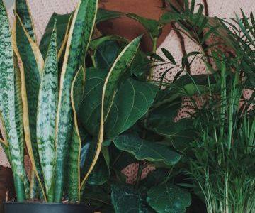 Cuándo y cómo regar tus plantas de interior