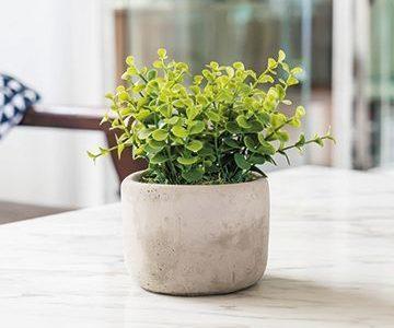 6 problemas comunes en plantas de interior y cómo evitarlos